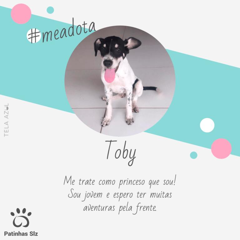 Toby Feed